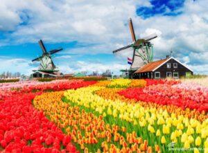 Spedire in Olanda